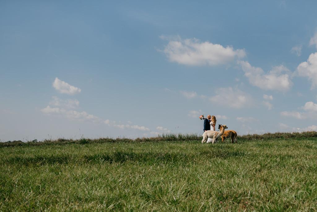 Alpaki plener ślubny, fotograf krakow